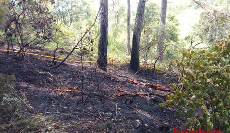 Imatge del bosc calcinat a la Pobla de Cérvoles.