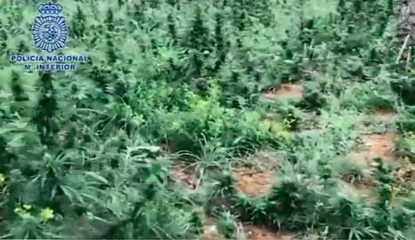 Vista de la plantació.
