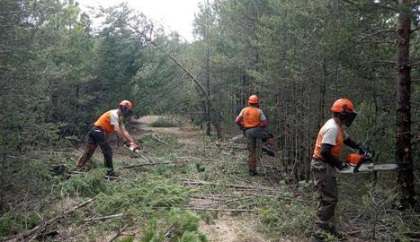Operaris treballant en la neteja de la massa forestal.
