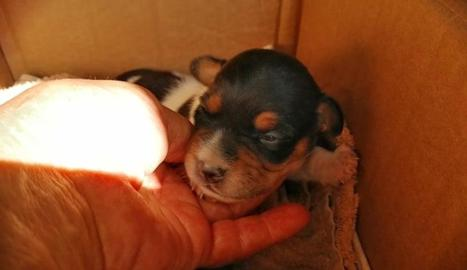Imatge d'un dels gossos abandonats.