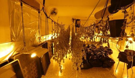 Imatge de l'interior de l'habitatge, que estava preparat per conrear maria de forma intensiva.