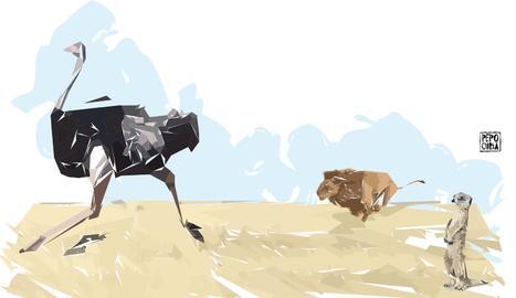 L'estruç i el lleó