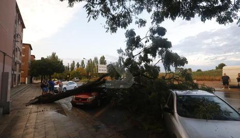 Un arbre caigut a la Mariola.