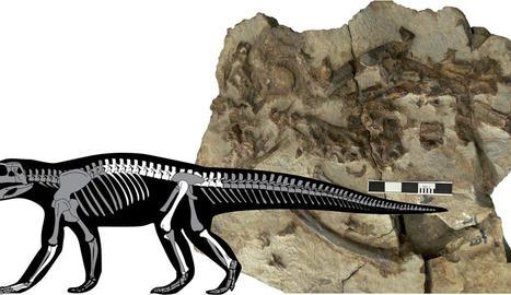 Imatge del fòssil després de ser recuperat.