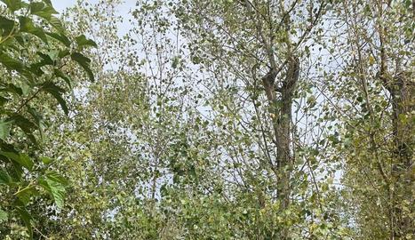 """Veïns van penjar cartells amb el missatge """"no vull que em talin"""" als arbres del parc."""