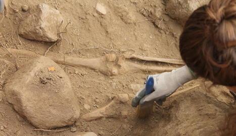 Imatge de part de l'esquelet trobat ahir.