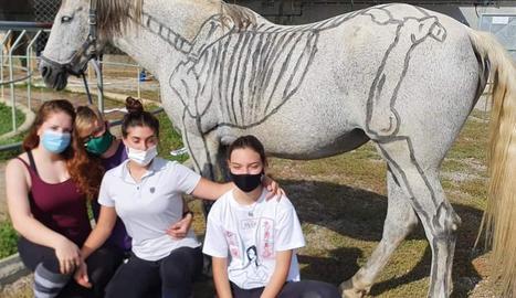 Els alumnes dibuixen les parts del cavall a classe de morfologia.