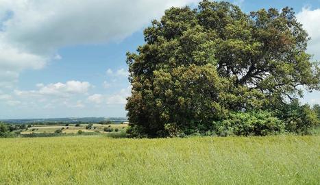 Natura, paisatge i...