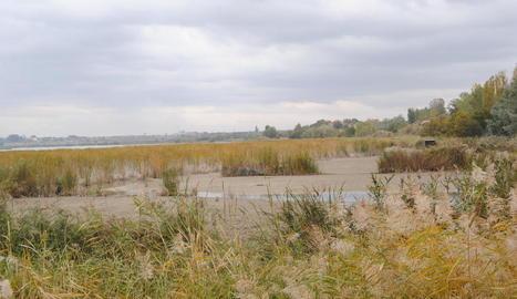 La zona de l'estany pròxima al bosc de ribera, una de les primeres a quedar-se sense aigua.