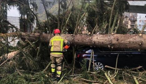 Imatge de l'arbre que va caure ahir a Les.