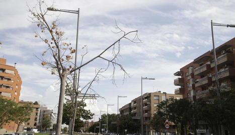 Imatge d'arxiu d'arbres morts a Corregidor Escofet.