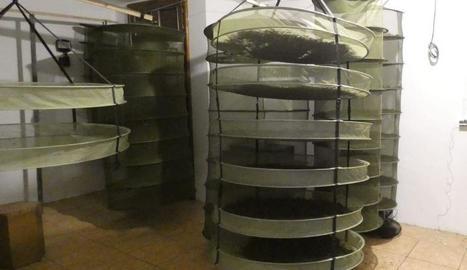 Imatge dels assecadors per a la marihuana.