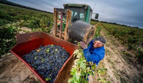 Imatge d'un agricultor en plenes tasques de la verema.