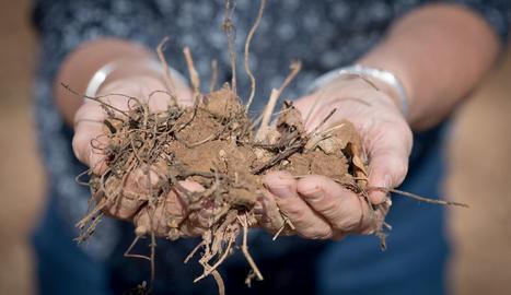 """Rosa Poch: """"Hi ha més organismes en una cullerada de terra que persones al planeta"""""""