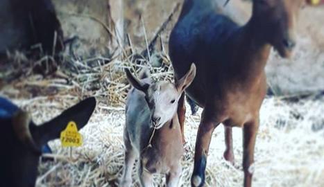 L'Amaia comparteix sovint per Instagram fotos del seu ramat.