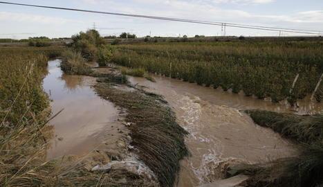 Fruiters de l'Horta de Lleida en les inundacions del 2019.