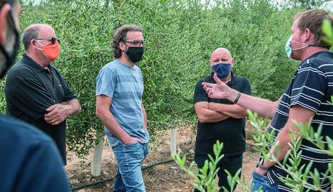 matèria primera. La qualitat de les olives de les quals surt l'oli és innegable.