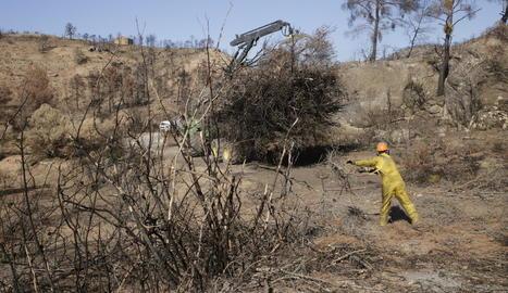 Imatge d'arxiu de la regeneració del bosc de Maials cremat al gran foc de la Ribera d'Ebre.