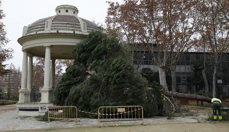 L'arbre va caure just al costat de la glorieta.