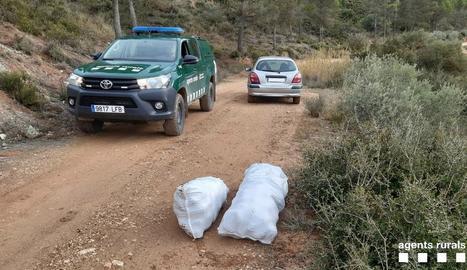 Els tres sacs amb les pinyes recollides van ser decomissats.