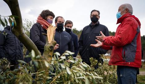 La consellera Jordà en un moment de la visita en una finca d'olivera a Vinaixa.