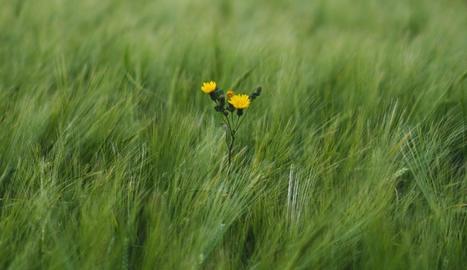 Per què interessen, les males herbes?