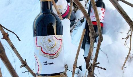 Botelles del vi Saó Expressiu 2015, guanyador dels Catavinium.