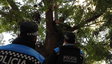 El portaveu d'Ipcena es va enfilar a l'arbre perquè no el talin.