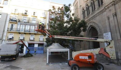 La Paeria va intentar talar l'arbre a l'octubre, però Ipcena ho va evitar.
