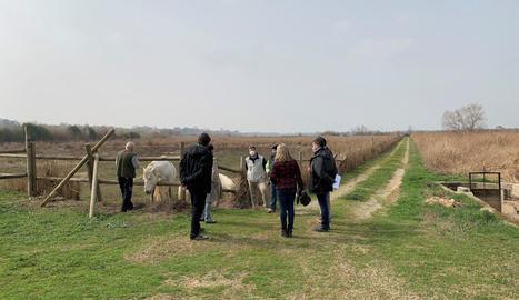 El Consorci promourà la pastura de cavalls de la Camarga.