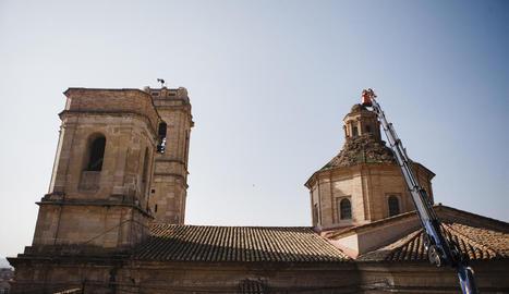 Operaris de Medi Ambient al retirar nius de cigonyes de la cúpula de l'església d'Aitona.