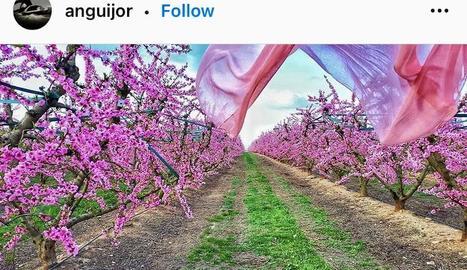 Instagram ha florit