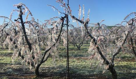 El reg per aspersió va permetre cobrir de gel aquests arbres per protegir-los del fred extrem.