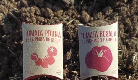 Les quatre varietats de llavors que ja poden adquirir-se a les botigues de la Cooperativa Alba, al Pallars Jussà, Tàrrega i també online a www.botiga.aalba.cat.