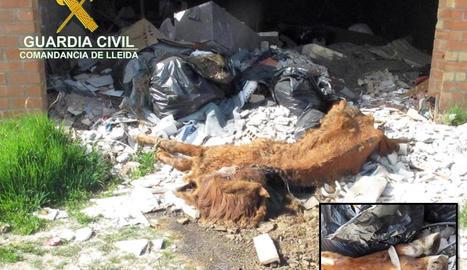 La Guàrdia Civil localitza el cadàver d'un cavall en una nau abandonada de Lleida