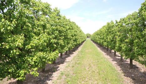 A Europa hi ha un debat obert per l'ús de pesticides.