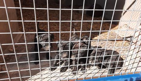 Imatge dels cinc cadells que han estat robats.