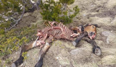 Les restes de l'euga morta que es va trobar la setmana passada en una zona d'Isil.