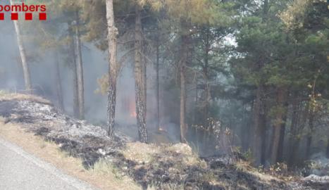 Els Bombers atenen 43 serveis per caiguda d'arbres per la tempesta als Pirineus i treballen en un foc de llamp a Navès