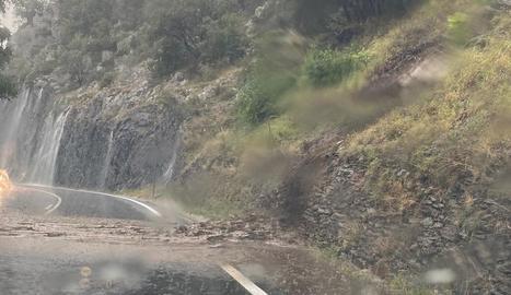 Fulles, olives i pedra al peu d'una de les oliveres afectades per la pedra a Bovera.