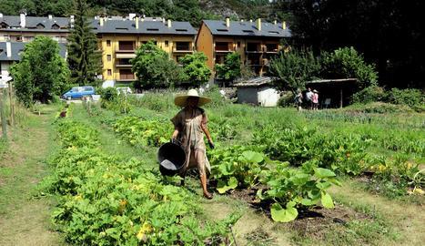 Una voluntària col·labora amb les tasques de neteja de l'hort comunitari de Senterada.