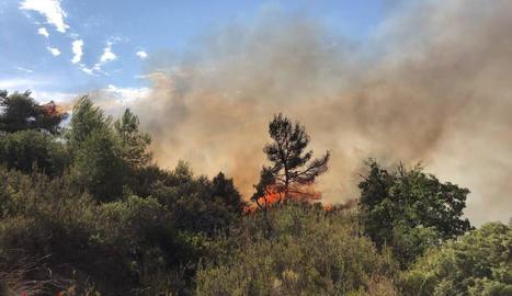 Un incendi calcina 7.000 metres quadrats de vegetació a l'Albagés