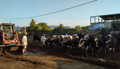 El ramader Manel Olsina, a la seua explotació de boví de llet, a Tremp.