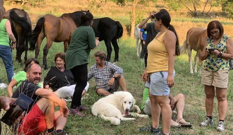 Els cavalls s'han instal·lat en camps cedits per veïns d'Arsèguel i Cava.