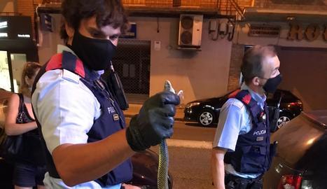 Troben una serp al centre de Mollerussa