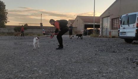 Bombers, policies i membres de Protecció Civil treballen amb els gossos en diferents exercicis a Lleida ciutat.
