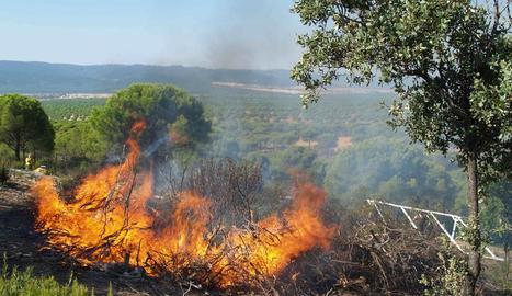 Què hi ha darrere dels incendis forestals?