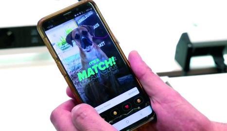 buscant acollidors via mòbil. Tinder ensenya perfils d'usuaris que es trobin a prop; així els interessats a adoptar poden conèixer in situ els animals.