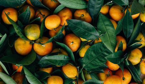 Mercadona revela l'origen de les seues taronges i mandarines