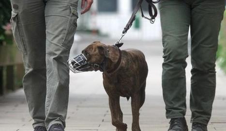 Imatge d'arxiu d'un gos perillós amb morrió.